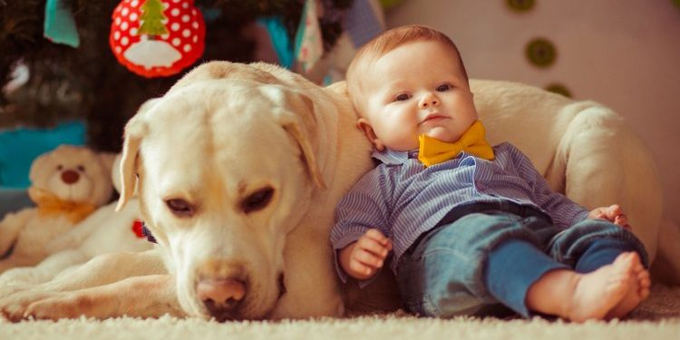 Baby and a dog on clean carpets in front of a Christmas tree | RCS |Washington, MO Carpet Cleaning Service